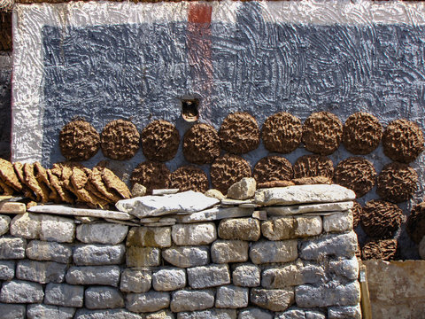 Cow and yak dung drying on the walls of a tibetan house. This will be used as  fuel in winter. Sakya, Tibet