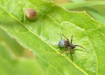 Spider sitting on the grass.
