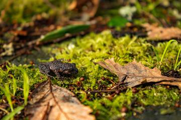 amphibian resting