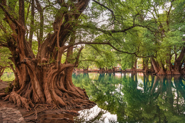 Zelfklevend Fotobehang Diepbruine Beautiful reflection of trees at the Camecuaro Lake National Park in Michoacan, Mexico