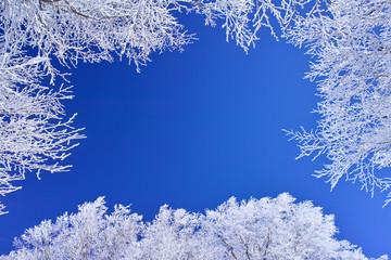 蔵王の霧氷