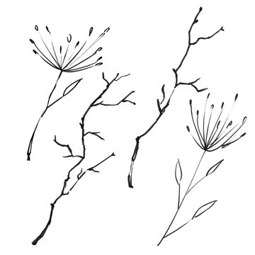 Stems, grass, branches and flowers in a graphic set. Isolated on white background.