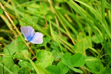 blue butterfly on leaf.