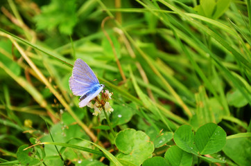 blue butterfly on leaf.