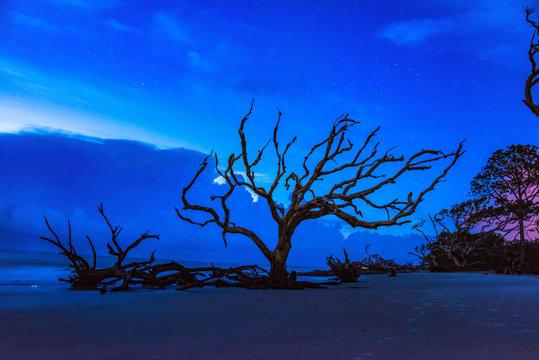 Driftwood Beach in Jekyll Island, Georgia, USA