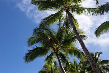 Tropical palm tree 4
