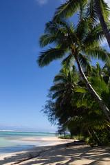 Tropical palm tree 3