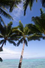 Tropical palm tree 2