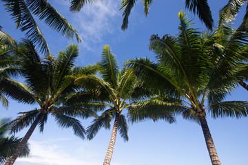 Tropical palm tree 1