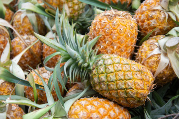 pineapple from farm