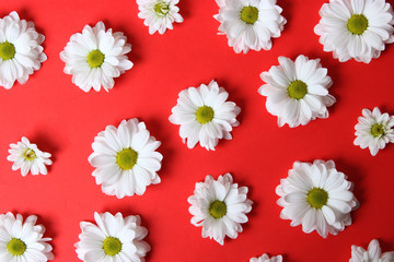 Background of daisies on a red background . Beautiful flowers with white petals on a red background  .March 8.Valentine's Day.Birthday.
