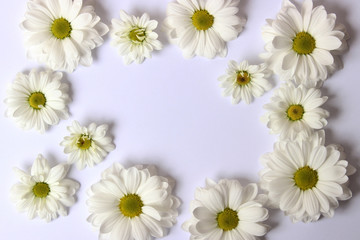 Beautiful flowers with white petals on a white background with space for text.March 8.Valentine's Day.Birthday.