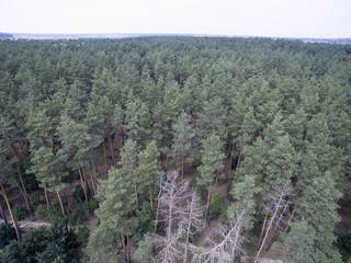 forest, view from above