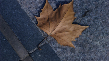 A Fallen Yellow Leaf on the Ground