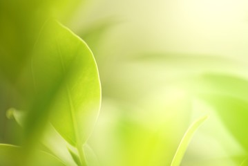 green leaf macro shot with dreamy day light soft focus background