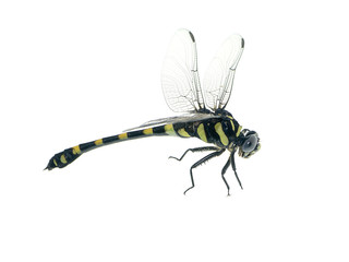 macro image of dragonfly