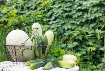Harvest of ripe cucumber, zucchini and pumpkin in metal basket