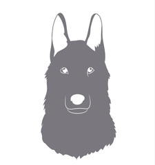 portrait of a gray wolf, silhouette, vector