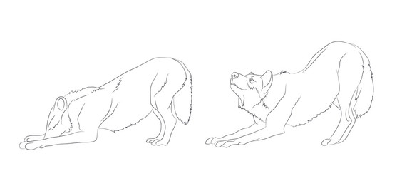 wolf stands, lines, vector