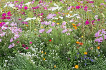 Eine Sommerwiese mit vielen verschiedenen blühenden Wildblumen