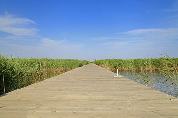 Wooden bridge under the blue sky in the wetland park