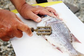 うろこ引きを使った魚の鱗取りの写真イメージç´材