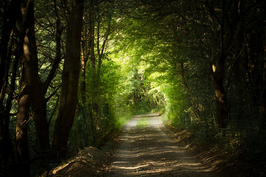 mysterious path in forest