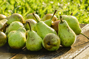 Vintage pears on a board in the garden.