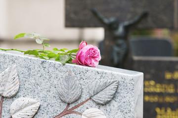 Churchyard, Friedhof, Grab, Allerheiligen, Allerseelen, Rose, Textraum, copy space