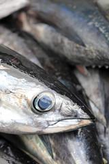 atún bonito pescado país vasco 4M0A1092-f18