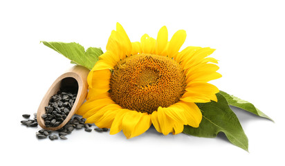 Photo sur Aluminium Tournesol Sunflower with leaves and seeds on white background