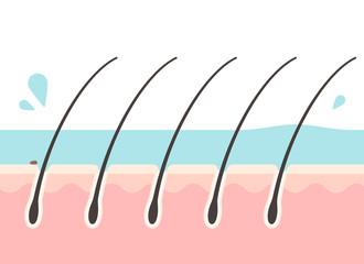 すすぎ中の頭皮の断面図