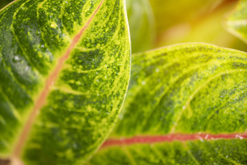 Closeup green leaf with nature background in garden with sunlight