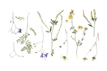 Wild dried meadow flowers on white background, top view