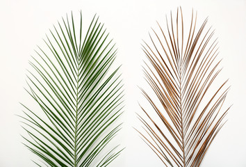 Tropical Date palm leaves on white background, top view