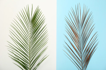 Tropical Date palm leaves on color background, top view