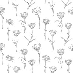 vector seamless pattern with calendula flowers