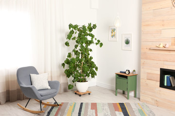 Stylish room interior with large houseplant and rocking chair near window