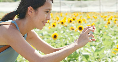 Woman taking photo on sunflower field