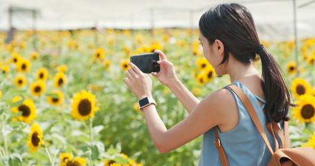 Woman taking photo on sunflower field