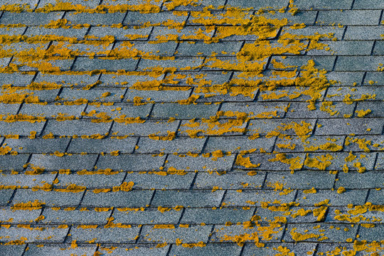Moss on shingles background pattern and texture