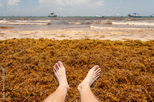 Feet on Sargassum seaweed at the beach, near Tulum, Mexico