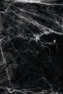 Spider web over black background. Halloween concept.