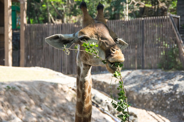 Khao Kheow Open Zoo in Pattaya
