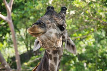 View of giraffe in jungles