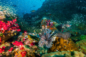 Keuken foto achterwand Koraalriffen Colorful Lionfish surrounded by tropical fish on a coral reef in the Andaman Sea