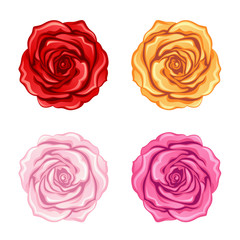 Set of roses on a white background