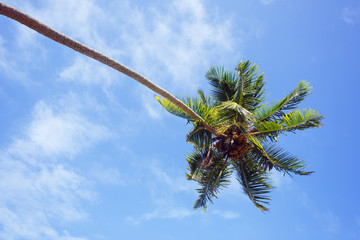 View on the palm tree