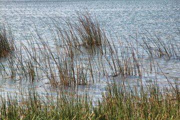 Lake with Grass and Rippled Water Background