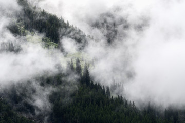 Mountain mist rises through evergreen trees after a rainfall